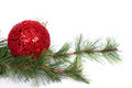 A red christmas ornament on a pine branch white background Stock Image