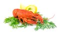 Red cooked lobster with dill and lemon isolated on white background Royalty Free Stock Photo