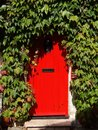 Red cottage door surrounded by ivy creepers Royalty Free Stock Photo