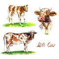 Red cows set, bull-calf standing on green meadow, side view, portrat with bell, hand painted watercolor illustration design Royalty Free Stock Photo