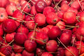 Red crab apples x mini apples x organic fruit of wild species of apple Royalty Free Stock Photos