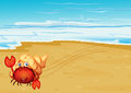 A red crab with a shell at the seashore illustration of Royalty Free Stock Images