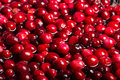 Red cranberries in sauce pot to boil down Royalty Free Stock Photography