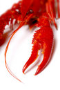 Red crawfish Stock Image