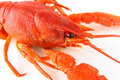 Red crayfish on white Stock Image