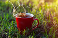 Red cup of coffee on the green grass Royalty Free Stock Photo
