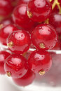 Red currant Stock Photos