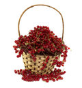 Red currant in basket ripe wicker isolated on white Stock Photos
