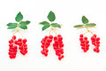 Red currant berries with leaves symbolizing the trees with roots Stock Image