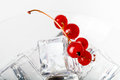 Red currant berries in a martini glass on white background. Tone Royalty Free Stock Photo