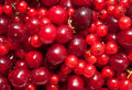 Red currant and cherry Royalty Free Stock Photography