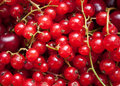 Red currant and cherry Stock Images