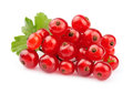 Red currant close up isolated on white Royalty Free Stock Photo