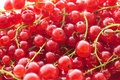 Red currant full frame image of a heap of small depth of field Royalty Free Stock Images