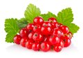 Red currant with green leaf Royalty Free Stock Photo