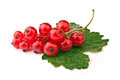 Red currant, isolated on white Royalty Free Stock Photo