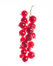 Red currant isolated on white current berries background Stock Images