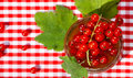Red currant jam in a glass Stock Image