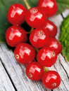 Red currant macro of on the wood background Stock Photos