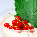 Red currant and milk  yogurt Stock Photography