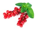 Red currant on mint isolated on a white background Royalty Free Stock Photography