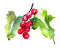 Red currant original watercolor illustration Royalty Free Stock Photography