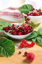 Red currant and raspberry Stock Images