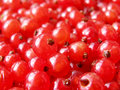 Red currant -  red berries Royalty Free Stock Image