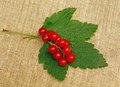 Red currant on a rough fabric Stock Image