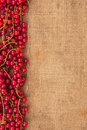 Red currant on sackcloth with place for text Stock Images