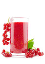 Red currant smoothie glass of fresh on white Royalty Free Stock Photos