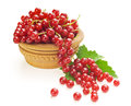 Red currant, on white background Royalty Free Stock Photo