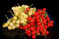 Red currant and white currant Stock Images