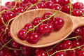 Red currant in wooden spoon Royalty Free Stock Photos