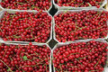 Red currants bunches of at farmer s market Royalty Free Stock Photography