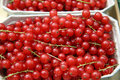 Red currants at farmer s market Royalty Free Stock Photos