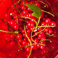 Red currants fresh currant berries in a wicker bowl in the old wooden table Stock Photography