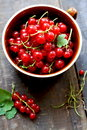 Red currants freshly picked from the garden Royalty Free Stock Image