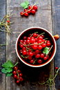 Red currants freshly picked from the garden Royalty Free Stock Photography