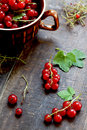 Red currants freshly picked from the garden Royalty Free Stock Photo