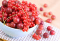 Red currants and gooseberries Royalty Free Stock Photo