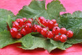 Red currants with green leafs Stock Photography