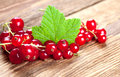 Red currants with leaf on old wood a green in a rural style Stock Image