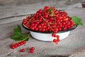 Red currants still life of Stock Image