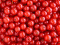 Red currants texture Stock Photography