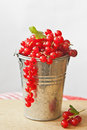 Red currants in a tin bucket before a light background Royalty Free Stock Images