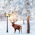 Red deer in a fabulous Christmas forest on a background of snowy trees and a lantern. Composite image.
