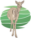 Red deer female vector illustration Stock Image