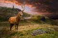 Red deer stag in dramatic mountain landscape Royalty Free Stock Photo