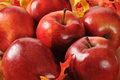 Red delicious apples with autumn leaves Stock Image